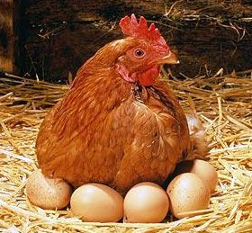 Hen-with-eggs