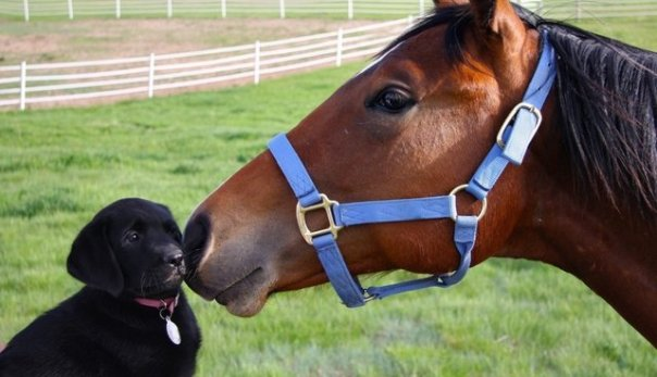 dog and pony