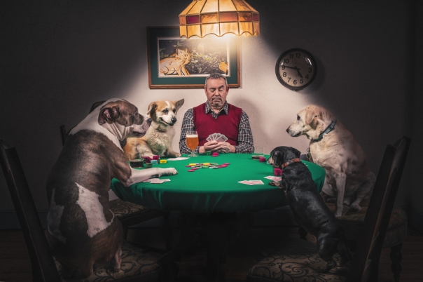 gratisography-man-dogs-playing-cards-thumbnail