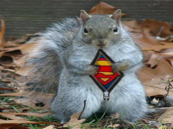 super squirrel1